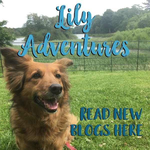 Lily Dog Trails. Lily Adventures